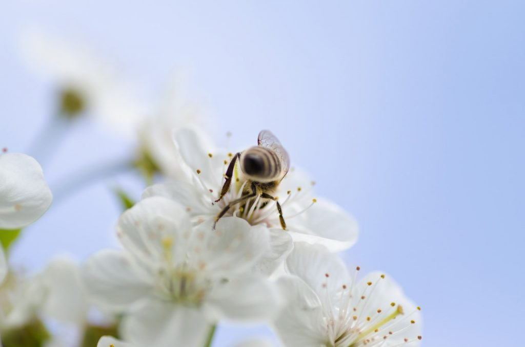 Encourage Pollinators and Beneficial Insects to Your Garden