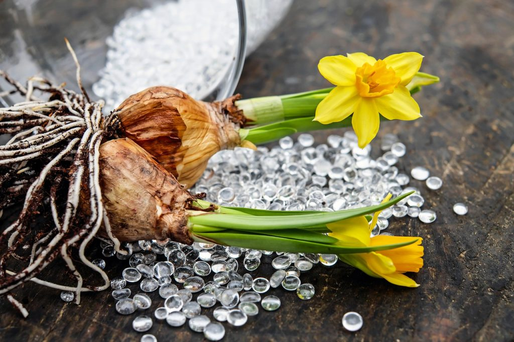 garden design ideas daffodils bulbs