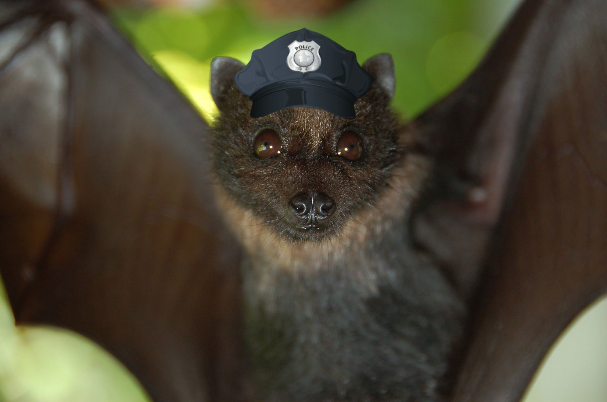 Bats Nature's Mosquito Police