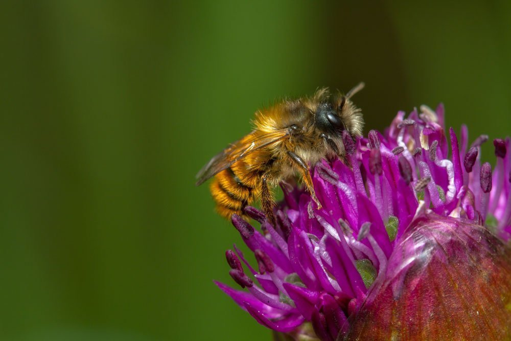 Heres How To Attract Mason Bees For Super Pollination