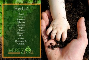 Herb Seed Kit For Sale