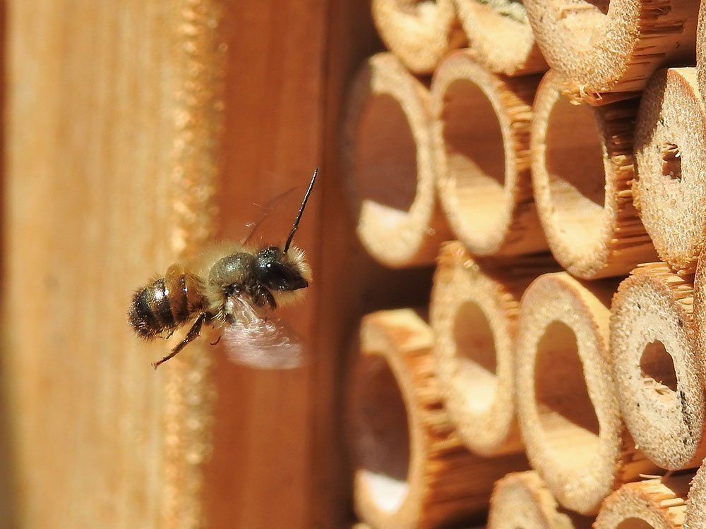 how to care for your mason bee house
