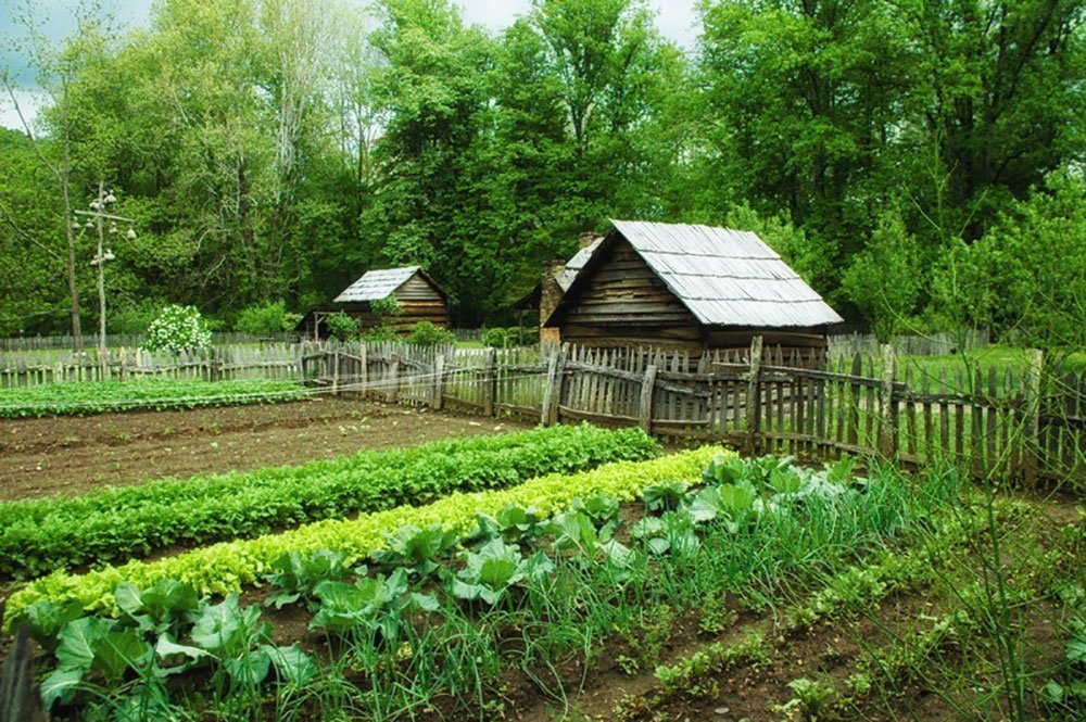 Planting For Preppers Survival Gardening For Beginners