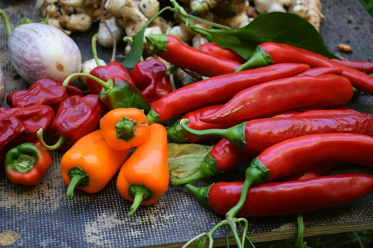 10 Steps to Getting Perfect Spicy Peppers