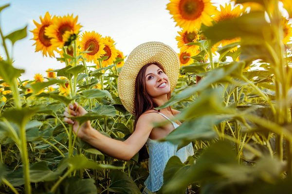 Heirloom Sunflower Seed Collection For Planting & Growing