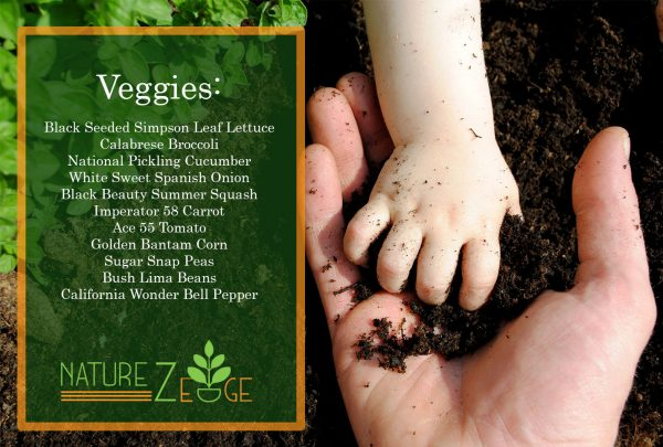 Heirloom Vegetable Seed Pack 11 Varieties| Non-GMO - NatureZedge