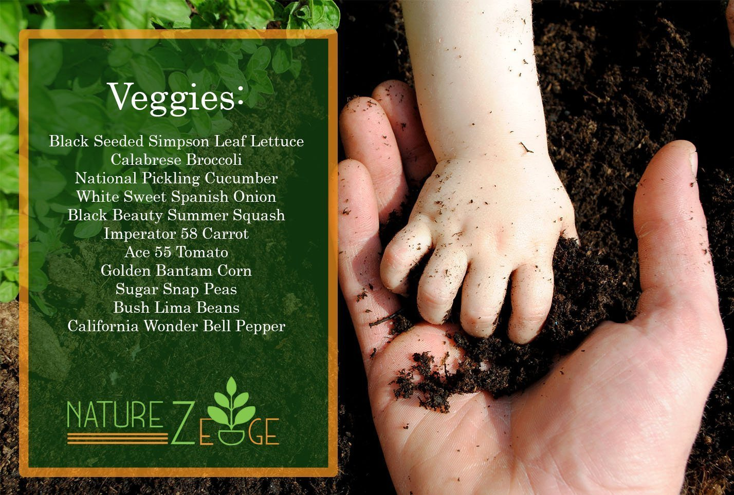 Heirloom Non-GMO Vegetable Seed Kit 11 Varieties
