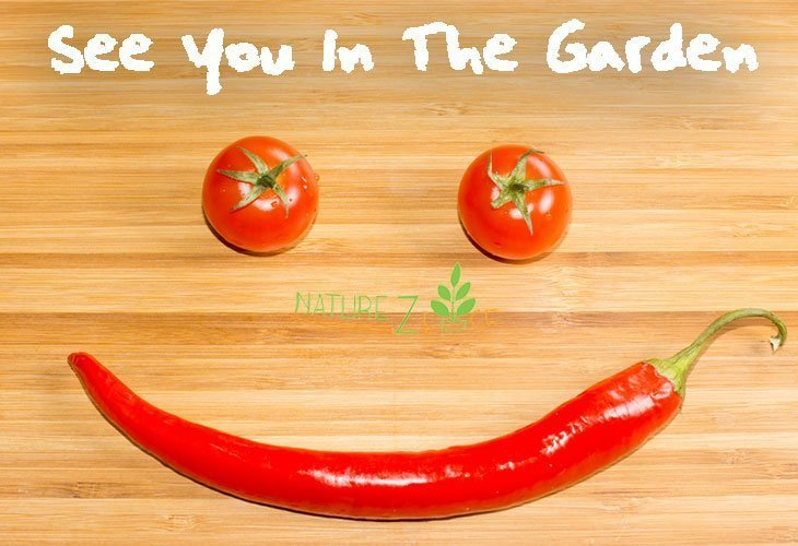 How To Grow Perfect Spicy Peppers In 10 Steps - NatureZedge