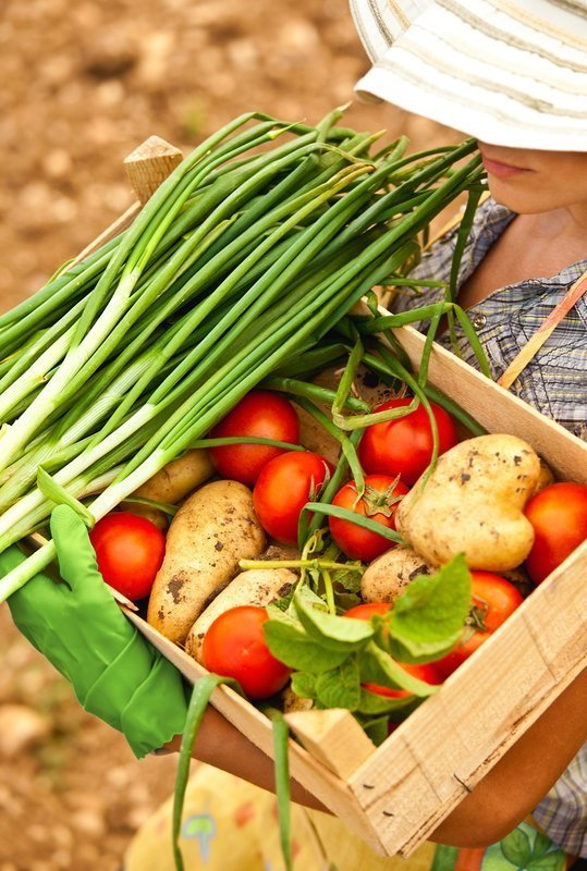 Tips for successful growing of vegetables