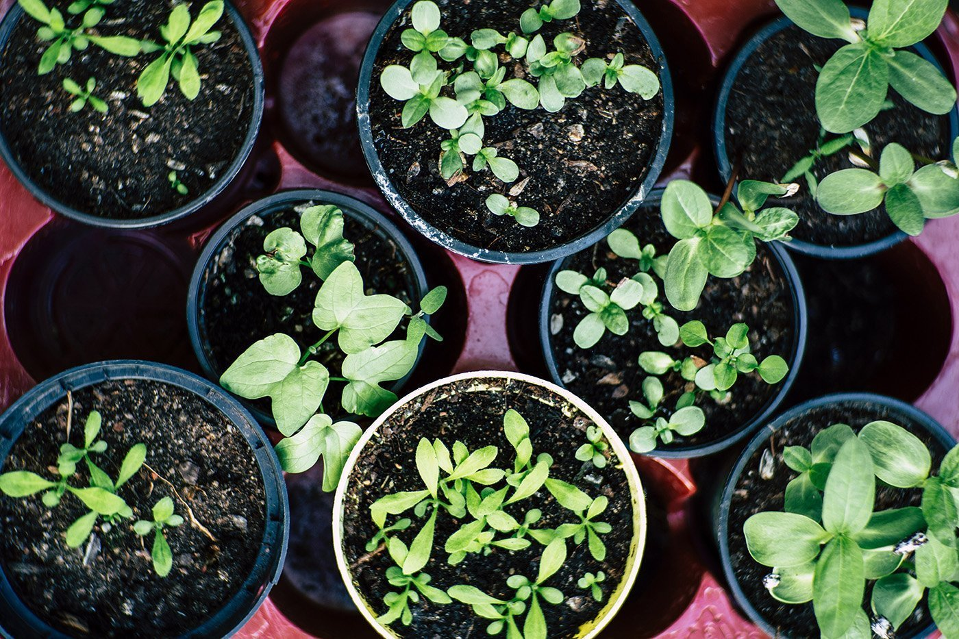 How to Start Growing Vegetables and Herbs Indoors