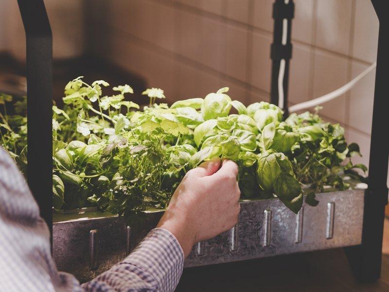 How To Start Indoor Gardening Naturezedge