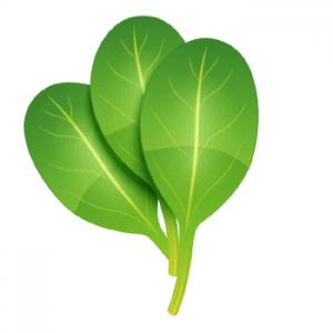 Growing Leafy Vegetables Indoors