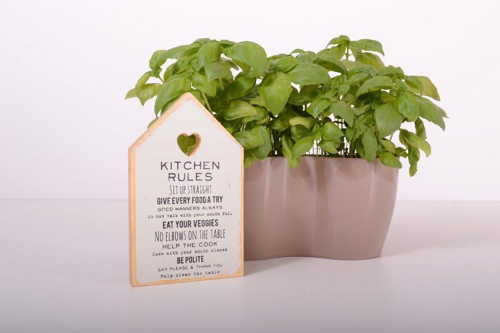 The Starter Guide To Indoor Gardening