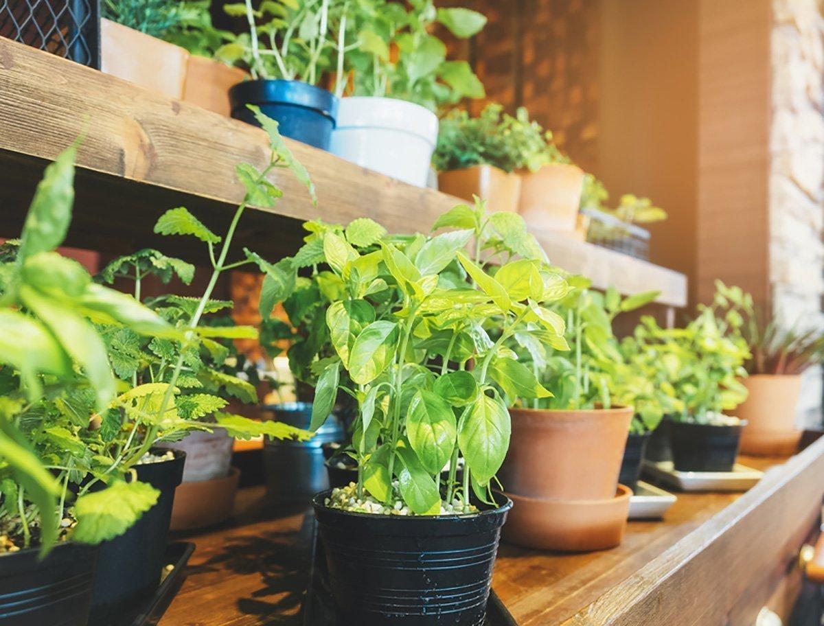 indoor gardening tips for the begginer