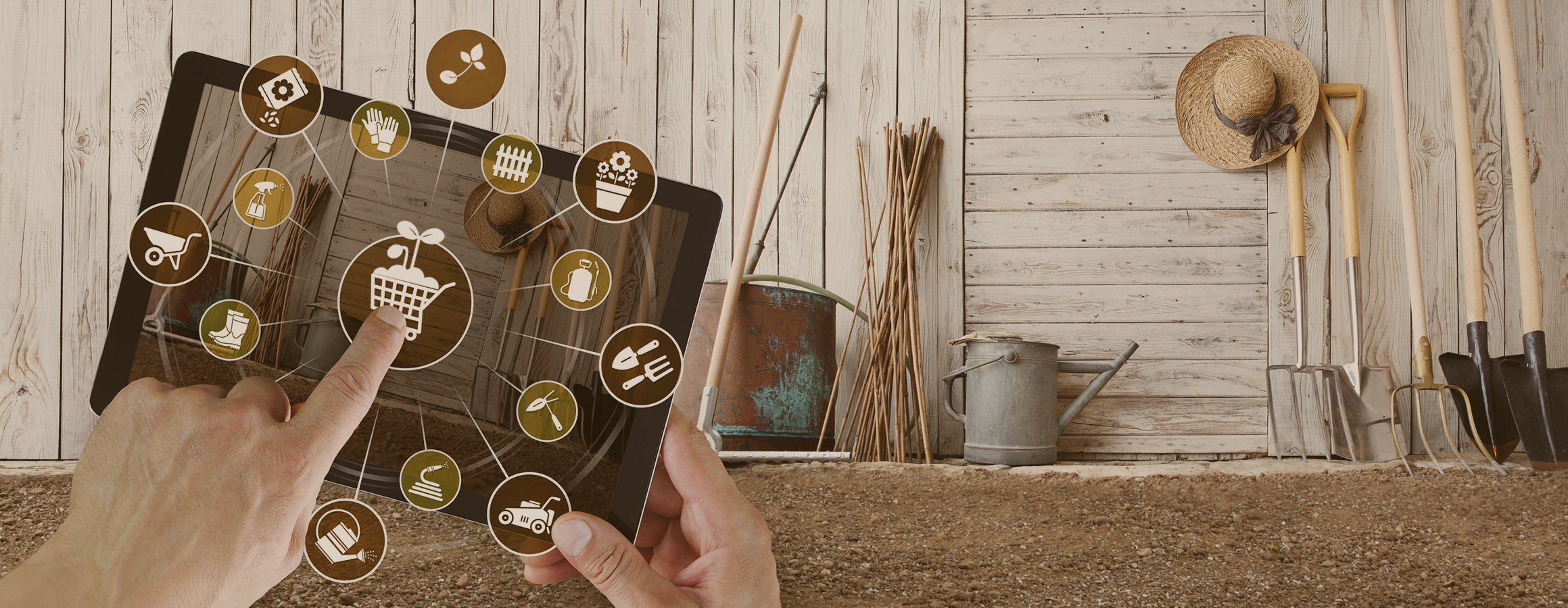 Buying Garden Seeds Online Everything You Need To Know
