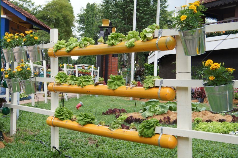 How To Grow The Most Amount of Vegetables in a Small Space