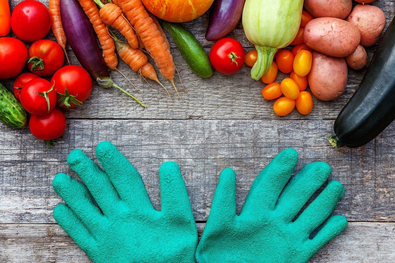 How To Maximize Veggie Growth