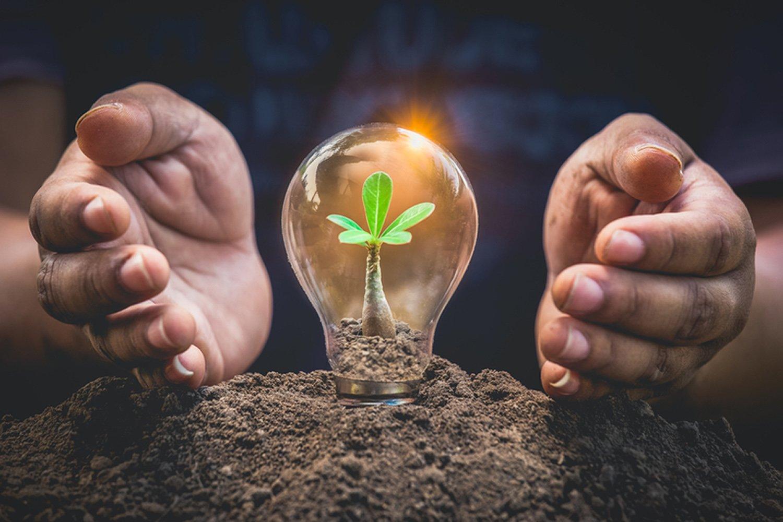 12 Sustainable Gardening Tips