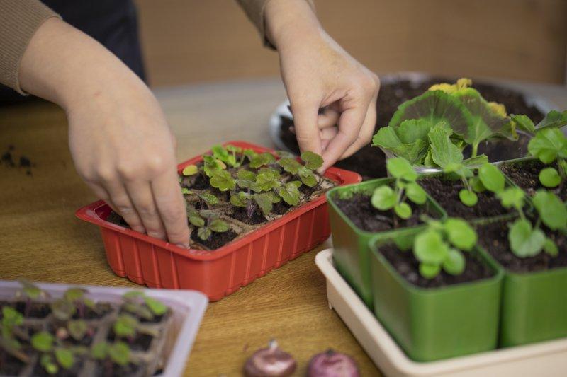 How do you start a garden for beginners