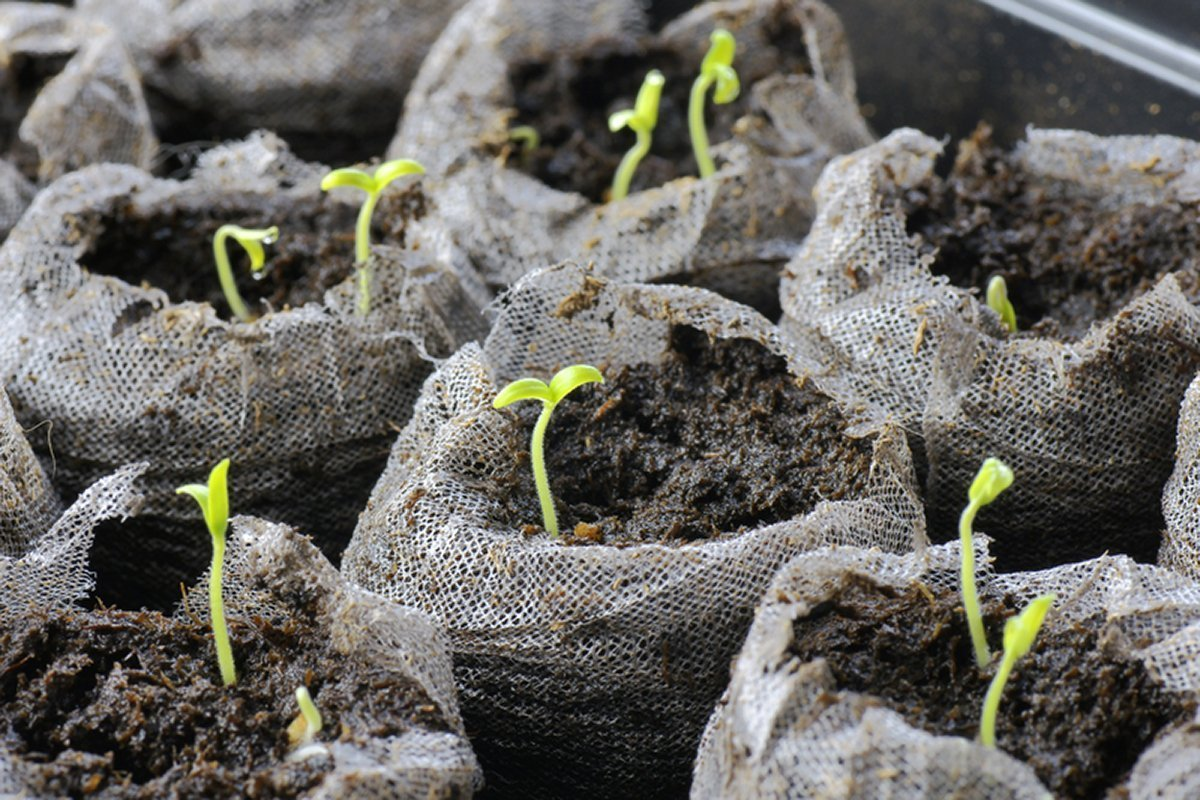 How to plant your first garden with a starter kit