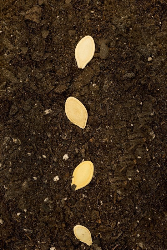 Insufficient soil preparation