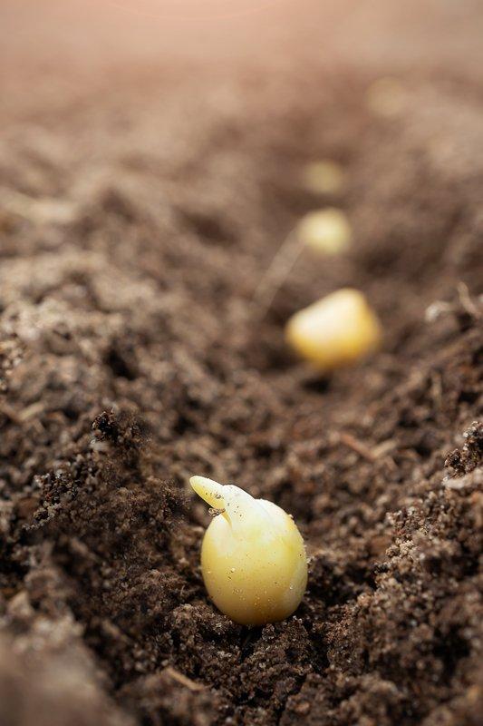 Seed depth