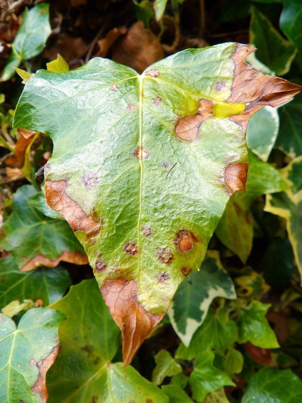 Top problems faced by beginning gardeners
