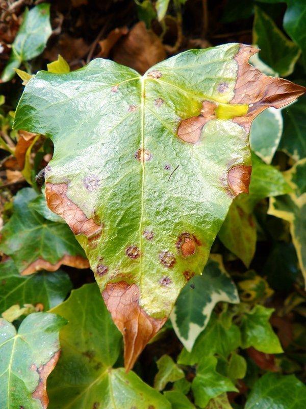 Top problems faced by beginning gardeners - NatureZedge