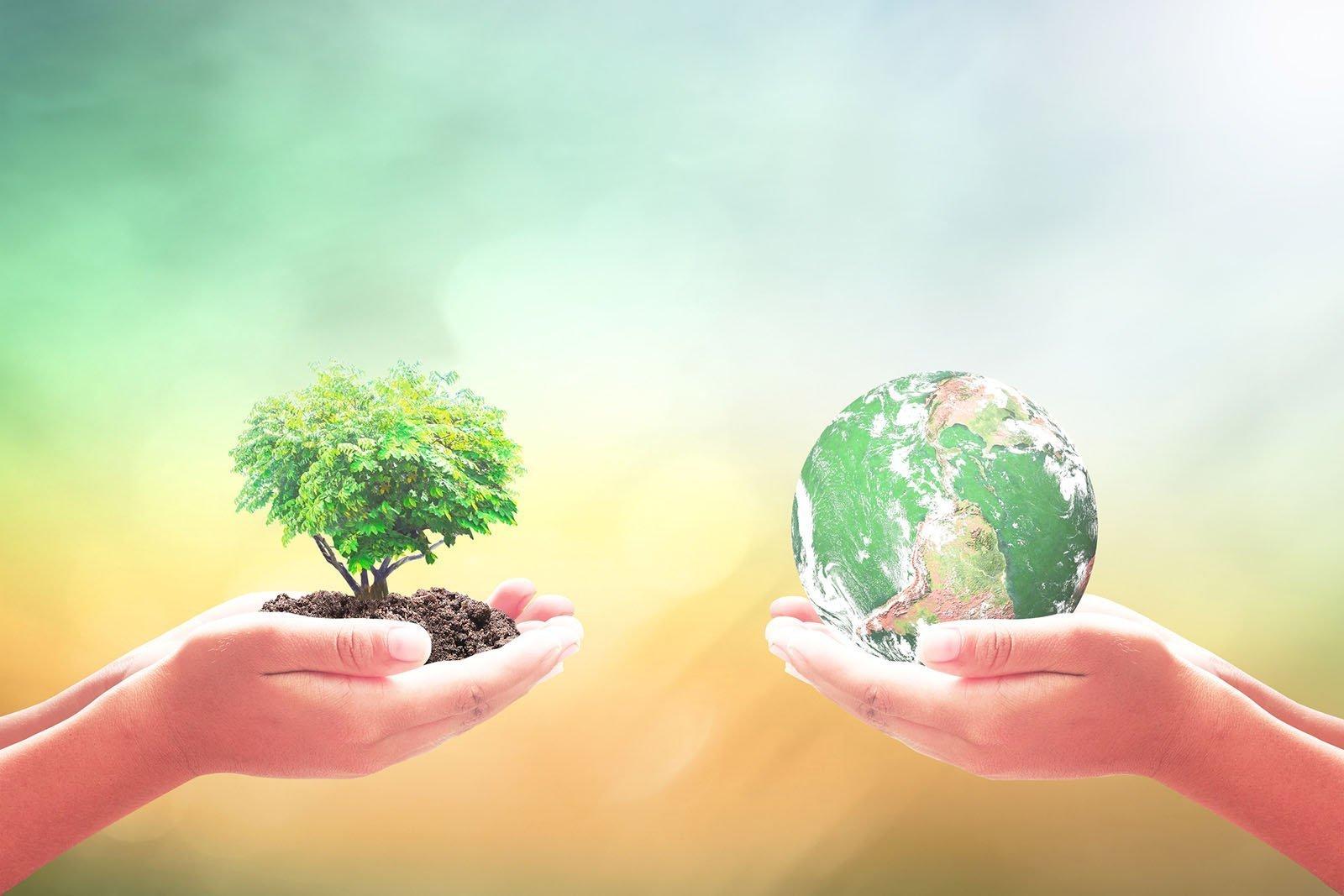 Basics of Designing a Sustainable Garden