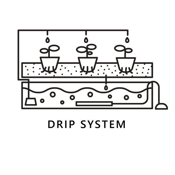 Drip Hydroponic system