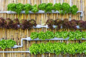 How to start a hydroponic vegetable garden