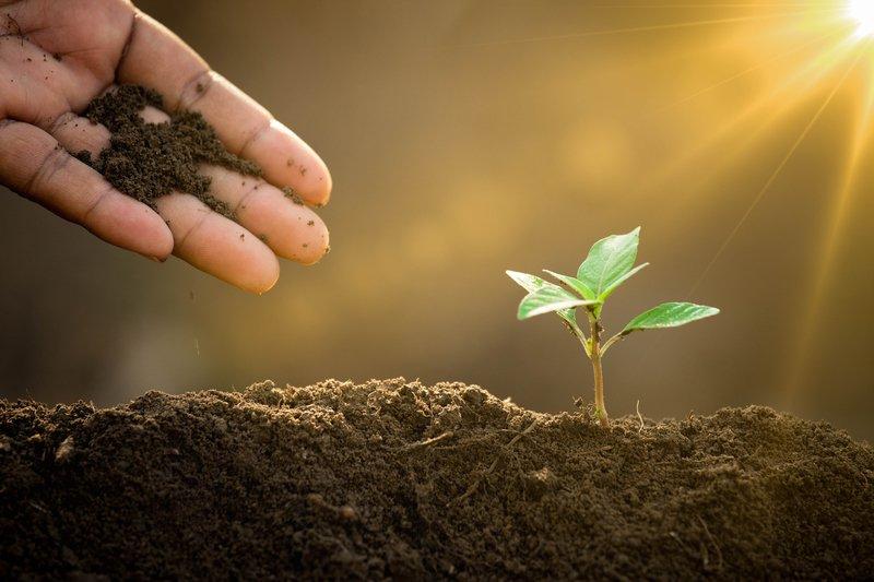 sustainable vegetable gardening