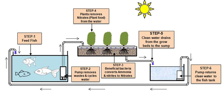 fish hydroponic system