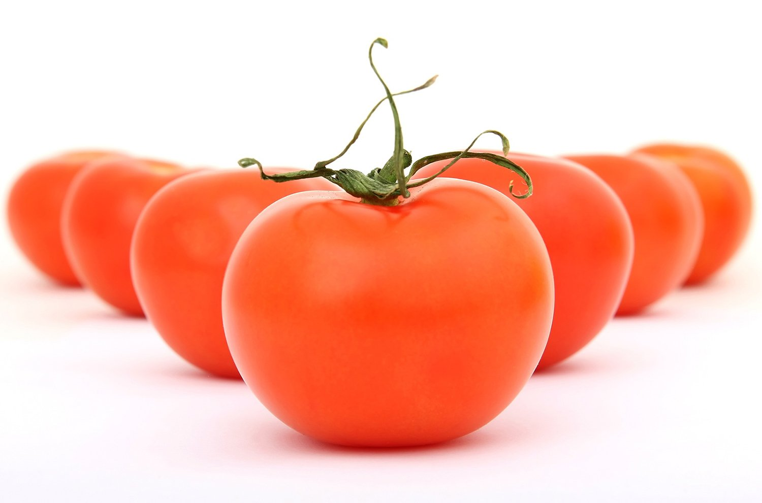 How To Grow The Ace 55 Tomato