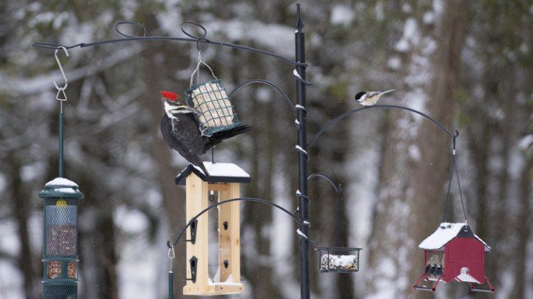 attracting birds in the winter to your garden