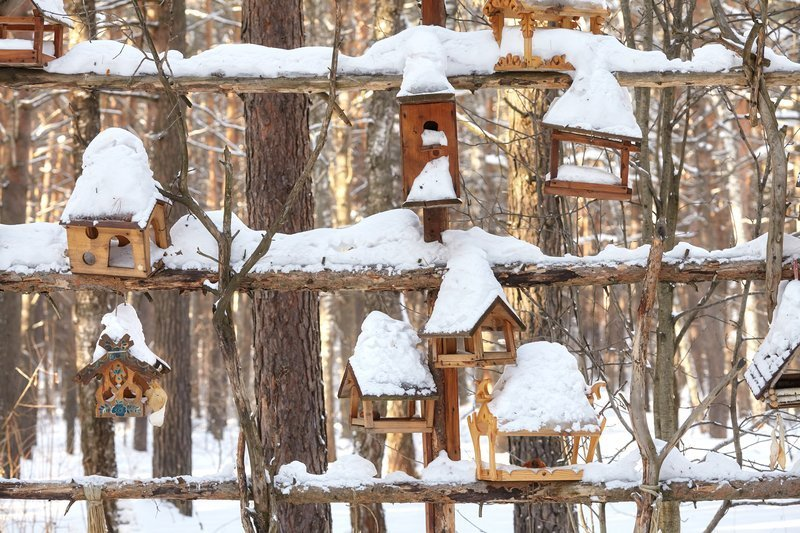 Top 10 Plants To Grow That Will Attract Birds In The Winter