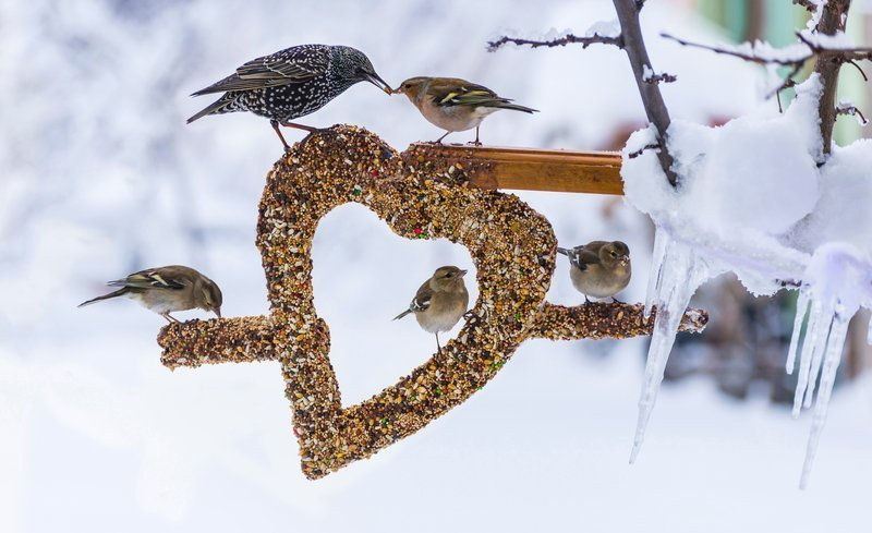 should i leave out birdseed in the winter