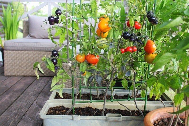 balcony vegetable garden plant size
