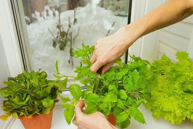 choose the right indoor spot to grow greens
