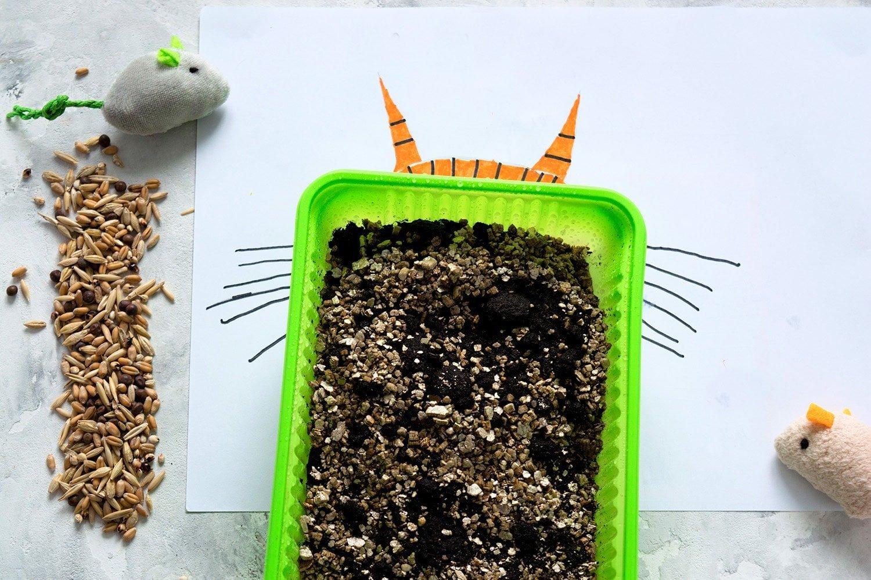 growing catnip indoors
