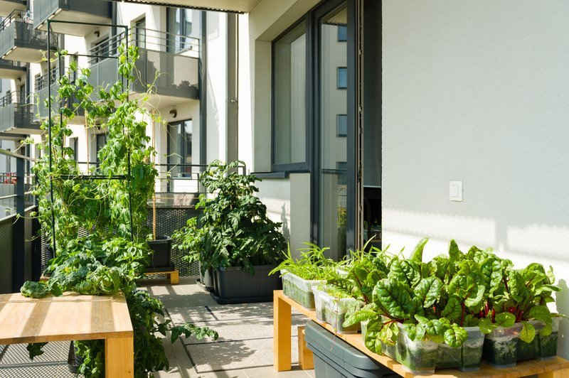 Where should I put my container garden?