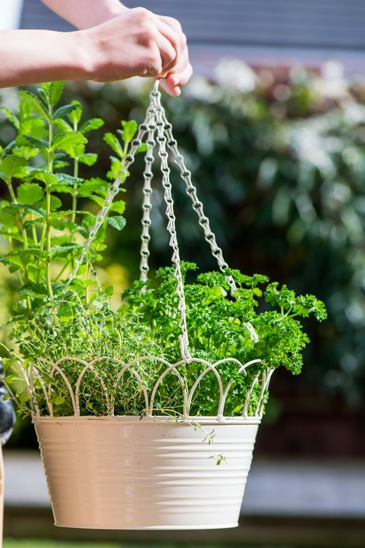Hanging Basket with fresh herbs