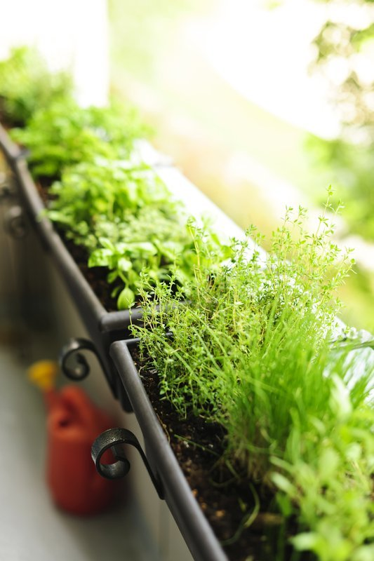 Vegetable Container Gardening For Beginners