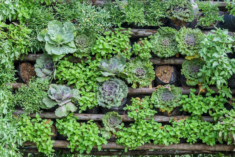 what is vertical vegetable gardening