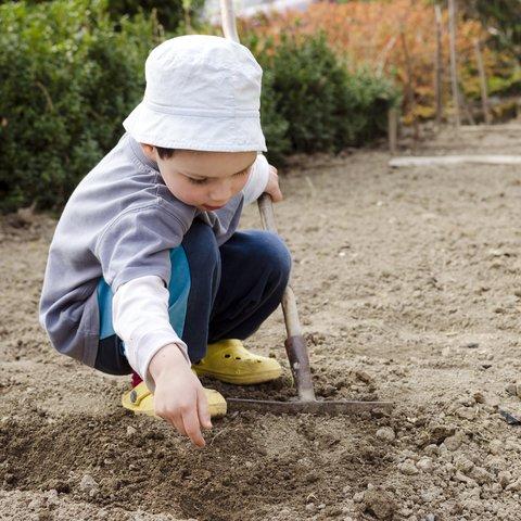 Children Sunflower Seed Planting