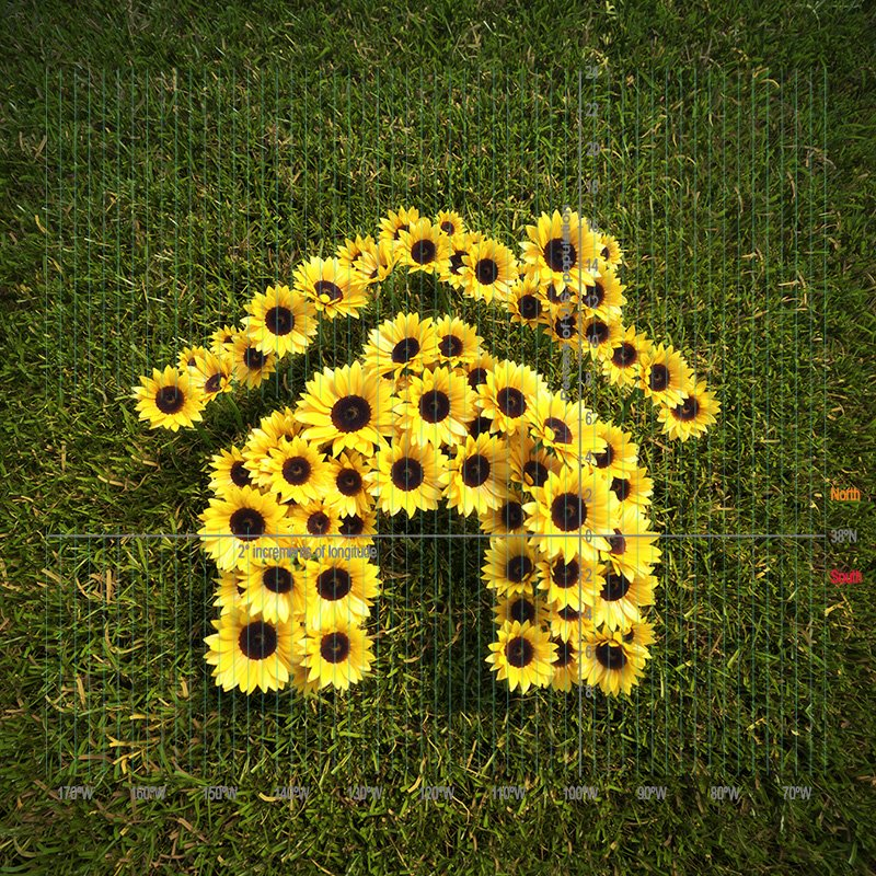 instructions for building a sunflower fort and house