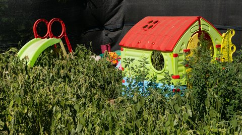 keeping weeds out of your sunflower house