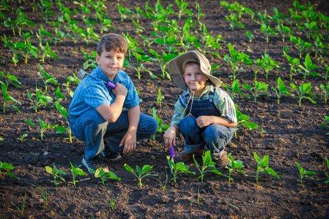 kids planting sunflower seeds