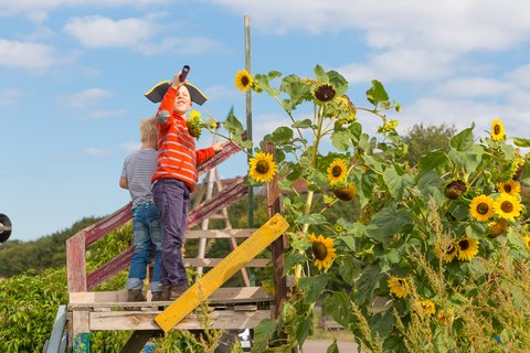 kids playing is a sunflower fort