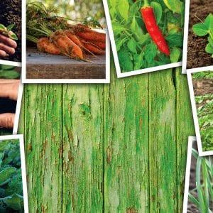 Easy To Grow Vegetables for Beginning Gardeners